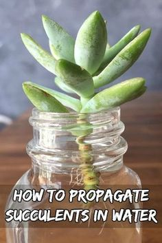 Propagating Succulents Tips on How to propagate succulents from leaves! See how to grow more succulents from the ones you already own!Tips on How to propagate succulents from leaves! See how to grow more succulents from the ones you already own! Propagate Succulents From Leaves, Types Of Succulents, Growing Succulents, Cacti And Succulents, Growing Plants, Planting Flowers, Propogate Succulents, Propagating Cactus, Flowering Succulents