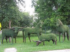 Topiary ranch animals are located at a nursery in Houston, TX by gtocruzr, via Flickr