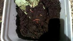 Mini Regenwurmfarm, um Kübelpflanzen immer mit frischen Nährstoffen zu versorgen