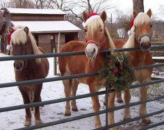 A Country Christmas (Decor Ideas)