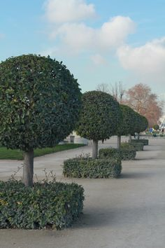 topiary...