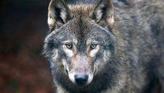Wildlife Thrives After Chernobyl Disaster