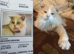 This is what love can do: my friend Pablo two years after being brought to the local shelter. by friendtofelines cats kitten catsonweb cute adorable funny sleepy animals nature kitty cutie ca