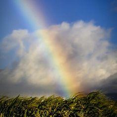 #offthedeck #maui #rainbow - by Mike Neal