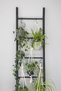 House Plants Decor, Plant Decor, Living Room Plants Decor, Plant Wall Diy, Diy Plant Stand, Room Decor, Hanging Plants, Indoor Plants, Hanging Herb Gardens
