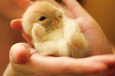 Tiny baby bunny. Tout petit bébé lapin.