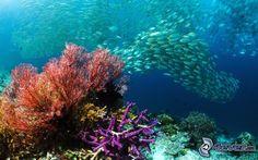 banco de peces, peces, fondo del mar, corales marinos