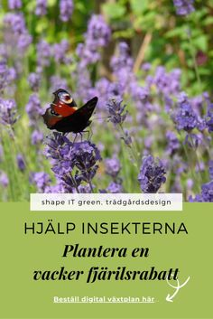 Bin, Garden Design, Shape, Green, Plants, Landscape Designs, Plant, Planets, Yard Design