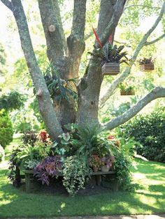 tree decorated with hanging flowerpots and flower bed