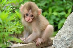 「子猿」の画像検索結果