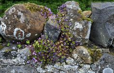stone fence in the Highlands Scotland