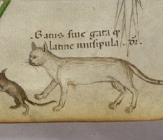 Cats in Art and Illustration: Sloane 4016 f. 40 Cat and mouse