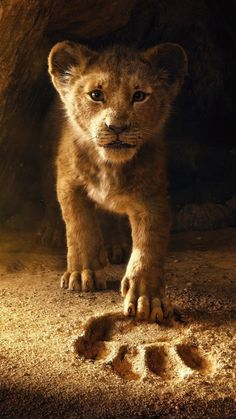 Der König der Löwen ist ein zukünftiger epischer Musikfilm des amerikanischen… The Lion King is a future epic music film of the 2019 American drama, … – The Lion King, Lion King Art, Lion King Movie, Lion King Simba, Lion Art, Disney Lion King, Lion King Remake, Lion King Poster, Lion King Drawings