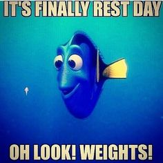 """#restday #weights #fitnessaddict #ft4lf #lift #weightloss #weightlifting #weighttraining #weightlossgoals #fitnesshumor #fitness #fat2fit #fitfamily…"""