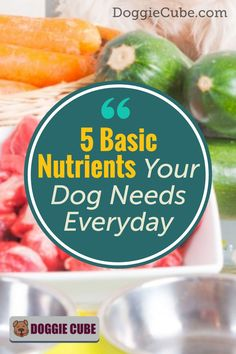 Your dog needs the essential nutrients to grow, go, and glow. Just like humans, your dog needs sufficient nutrition to be healthy. Here're some tips on what basic nutrients your dog need everyday. Dog Nutrition, Dog Diet, Dog Care Tips, Homemade Dog Food, Nutritious Meals, No Cook Meals, Dog Food Recipes, Health And Wellness, Glow
