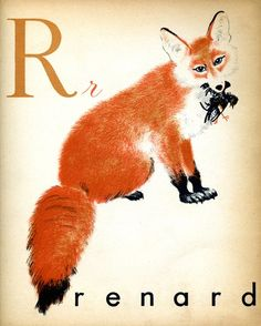 """R is for Reynard."" French alphabet letter cards available from The Interrupting Lion."