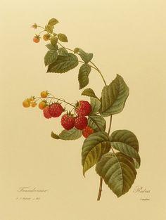 botanicals on Pinterest | Botanical Prints, Needlework and ...