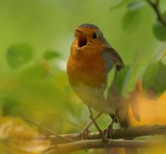 One of the things I love about Spring is the song of the bird outside my window singing his lil' heart out.