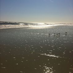Atlantic Beach, Jacksonville Florida