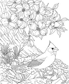Red Cardinal and Dogwood Blossom North Carolina Bird and Flower Coloring page