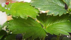 Wassertropfen an Blättern