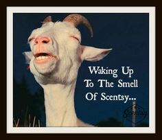 Waking up the smell of scentsy !