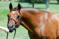 One of my favorite ponies is back! Sweet Treat, taken from our 2011 photo shoot at Pony Finals.