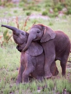 PetsLadys Pick: Funny Elephant Siblings Of The Day...see mor