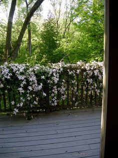 Clematis climbing plant - tips for planting, care and cutting - clematis montan. - Clematis climbing plant – tips for planting, care and cutting – clematis montana variety white -