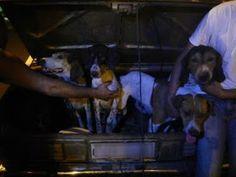 """""""O Grito do Bicho"""": Grupo é multado em R$ 393 mil por usar cães na caç..."""