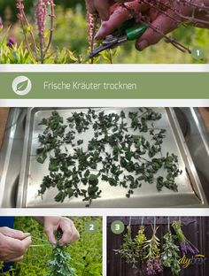 Kraut, Herbs, Candles, Homemade, Plants, Diy, Blossoms, Image, Gardening