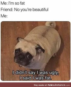 Scroll through these hilarious funny dog memes when you need a pick-me-up. Today we've rounded up the best funny dog memes. Humor Animal, Funny Animal Jokes, 9gag Funny, Crazy Funny Memes, Really Funny Memes, Funny Laugh, Stupid Memes, Stupid Funny Memes, Funny Animal Pictures