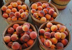 Globe Peaches - One of my favorite things in all of God's creation.  If your grandmother canned peaches, they were probably globes.  They are rather large, and thus require more time with a knife to get them into canning jars.  Of course they are the best fresh, and a ripe one will leave you with juice running down your arm.