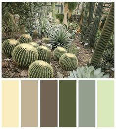 Color Board :: Mojave Desert and Vegas inspired Color Palettes Scheme Color, Green Colour Palette, Color Palate, Colour Schemes, Color Combos, Colour Palettes, Dry Desert, Mojave Desert, Spa Colors