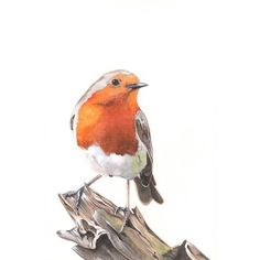 Robin Watercolor Painting 2014- bird print of watercolor painting ❤ liked on Polyvore featuring home, home decor, wall art, water color painting, watercolour painting, watercolor painting, watercolor wall art and water colour painting
