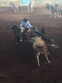 Chapala Jalisco Caballos