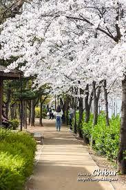 아름다운 서울 거리에 대한 이미지 검색결과