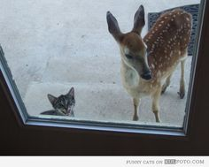 MOM! Can Bambi stay for dinner?