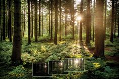 High Contrast Photography: How to Expose a Forest Scene in Strong Light   Digital Camera World