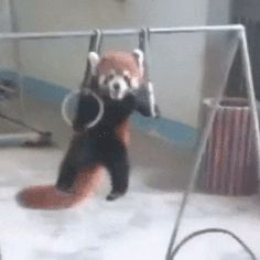 Just Red Panda Business: Adorable GIFs and a new tee! – TeeTurtle