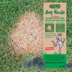 Dog Rocks Natur-Steine gegen Hunde-Pinkelflecken im Rasen 100 % Natur, gänzlich unbehandelt und frei von Chemie müssen alle zwei Monate ausgetauscht werden, damit die Wirkung gegen Urinflecken im Rasen weiter voll besteht 13,80 EUR