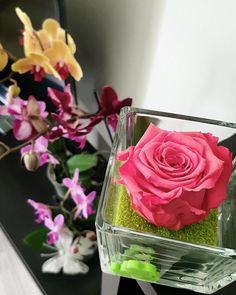 Le bonheur se cultive.  #RoseÉternelle #Orchidées #ApprécieAli #VeryGoodTrip #Happiness #LaReunion #Réunionnaise #Team974 #ReunionIsland by chloe_x3