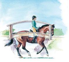 Develop your dressage horses topline...