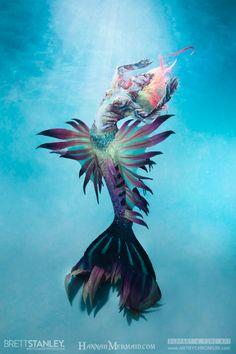 Evil Mermaids, Fantasy Mermaids, Mermaids And Mermen, Finfolk Mermaid Tails, Mermaid Cove, Fantasy Creatures, Sea Creatures, Realistic Mermaid Tails, Mermaid Stories