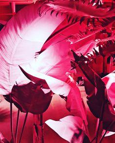 "Design   Web   Photography (@isabelcastronet) on Instagram: ""I find you very appealing 🍌🌴😎 #museumoficecream #icecream #food #foodie #candy #mangu""  I find you very appealing 🍌🌴😎 Museum of Ice Cream Miami Beach #museumoficecream #icecream #food #foodie #candy #mangu  #Miami #miaexplore #igersmiami #vscocam #art #artime #mashpics #photographersoninstagram #jj_forum #vsco #miamiphotographer #instagood #photooftheday #picoftheday #webDesign #graphicdesign #justgoshoot…"