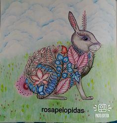 Joanna Basford Enchanted Coloring Roses Bunny Rabbit Book Nice Meeting You