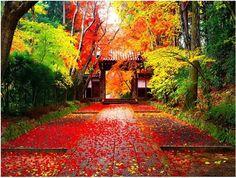 Autumn in japan-Golden autumn landscape wallpaper Landscape Wallpaper, Nature Wallpaper, Of Wallpaper, Mobile Wallpaper, Microsoft Wallpaper, Beautiful Wallpaper, Beautiful Images, Japanese Nature, Japanese Landscape