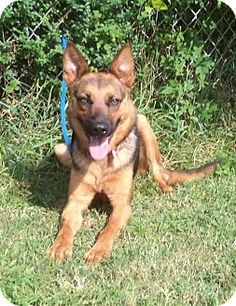 Act quickly to adopt MACEY. Pets at this Shelter may be held for only a short time.