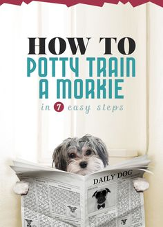7 steps to POTTY TRAINING your Morkie puppy   The Morkie Guide