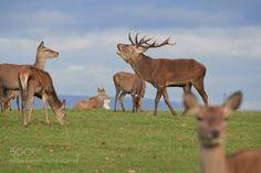 Red Deer by GregSheard1 via http://ift.tt/2fdz38P